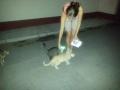 кормит котов